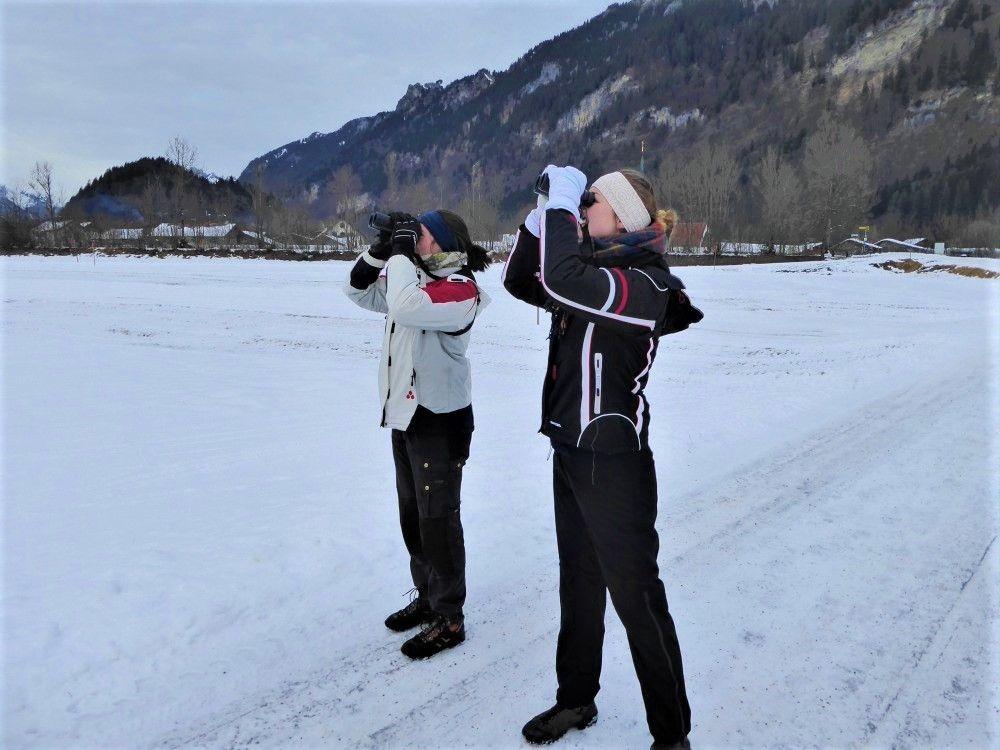 Die Ammergauer Alpen aus der